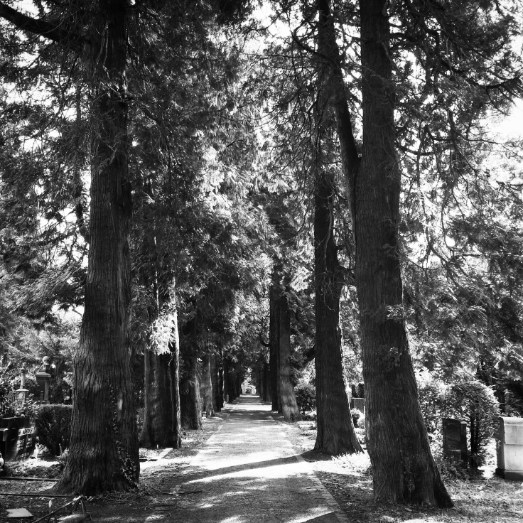 Towering pathways