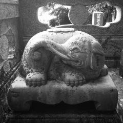 A rare elephant