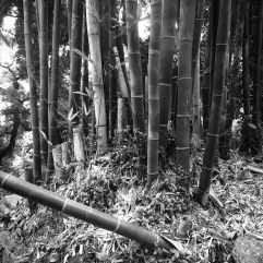 A small bamboo grove near the top