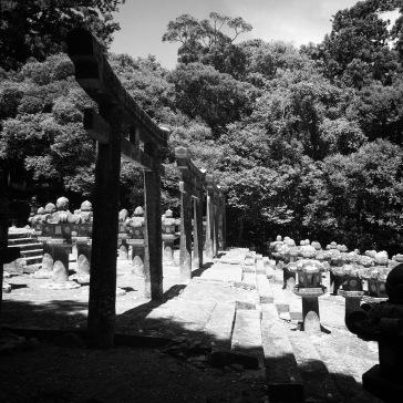 Torii gates and lanterns