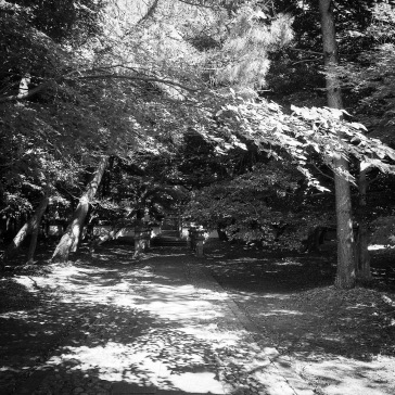 The path to the cemetery