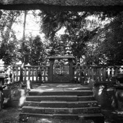 Under the torii gate