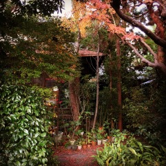 Overgrown garden, somewhere between Shinnyodo and Yoshida Shrine