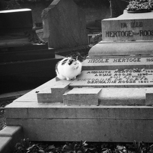 Cemetery cats are fat cats