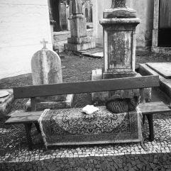 Cemetery cat on a rug