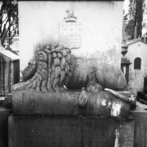 Big cemetery cat