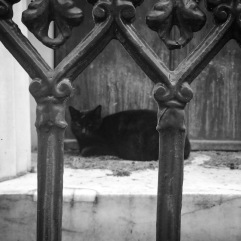 Black cemetery cat