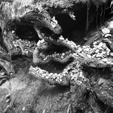 Stones on some roots
