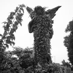 Ivy angel