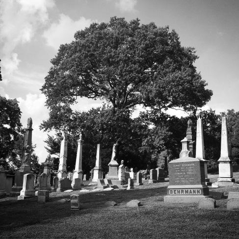 Obelisk grove