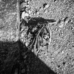 Forgotten flowers