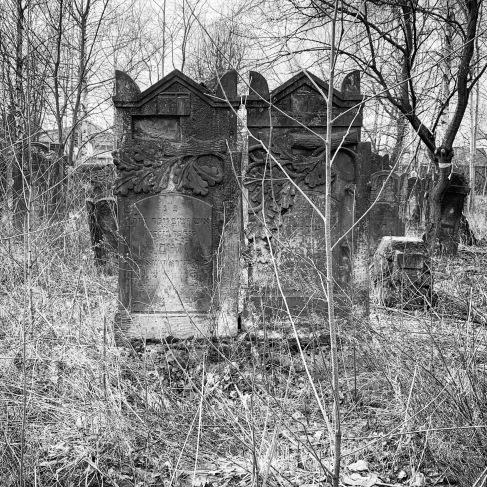 Broken oak over two graves