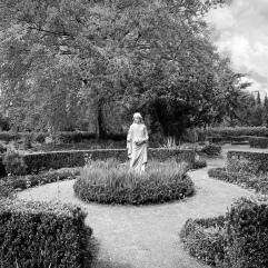 Single in the garden
