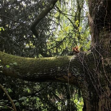 Squirrel alert